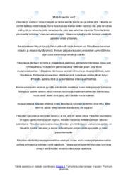 Mitä filosofia on |Essee | Arvosana 8